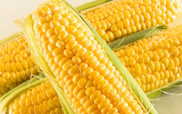 トウモロコシイメージ画像